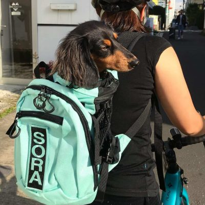 Black Haired Dachshund in K9 Sport Sack